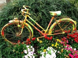 flowers-315394_640