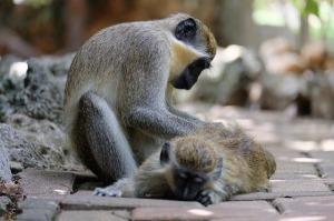 monkey-630608_640