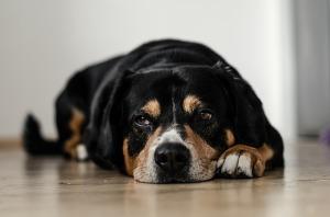 dog-691641_640