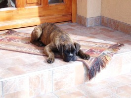 dog-667892_640