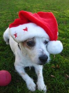 merry-christmas-1075324_640 (2)