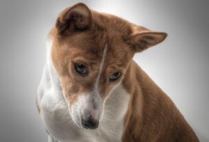 dog-601216_640 (2)
