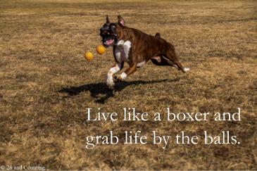 Boxer Humor